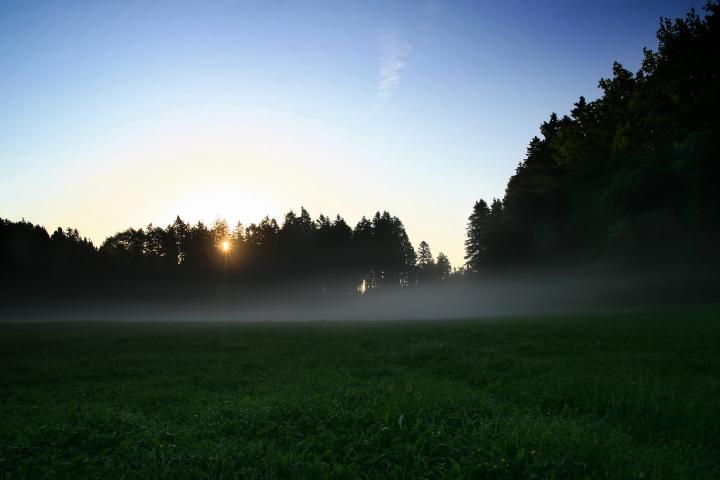 Nebel in der Lichtung