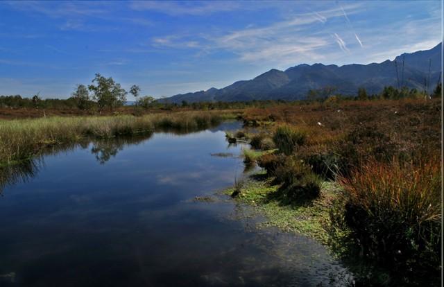Moorsee